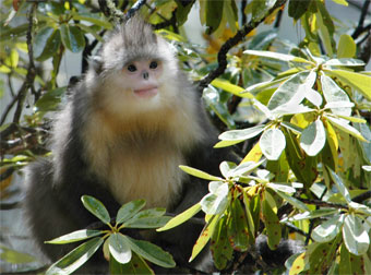 latest images of different monkeys wikipedia