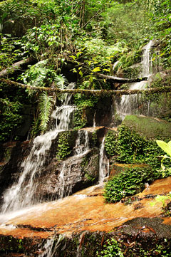 In search of wildlife, while dodging leeches, in Madagascar's ...