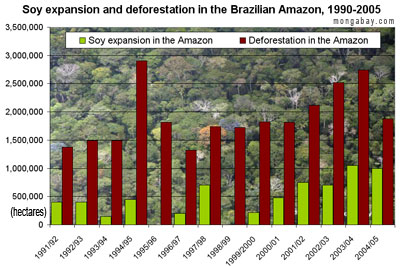 The Importance of Protecting the Rainforest