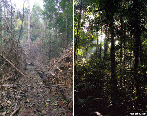 Small fires a big threat to Amazon rainforest biodiversity