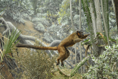 Bizarre and Beautiful: Five Amazing Creatures Found Only in Madagascar