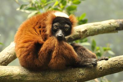 Madagascar Exotic, Antananarivo: Hours, Address, Madagascar Exotic Reviews: 4/5