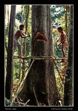 Strategi Baru Untuk Melestarikan Hutan