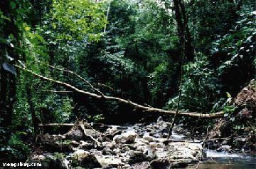 Costa Rican Creek in the Osa Peninsula, 2001