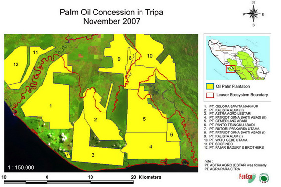 Images showing oil palm plantation concessions and forest cover change from 1990 to 2005 in Tripa. Courtesy of YEL/PanEco Foundation