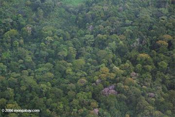 Forest management techniques for mitigation (REDD+)