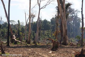 Apakah kita di sedang berada di tepian penyelamatan hutan hujan?