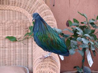 Woman turns home bird sanctuary into effort to save rare birds