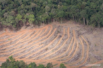 Fraud allegations against Indonesian palm oil giant widen