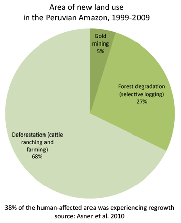 causes and effect of deforestation essay