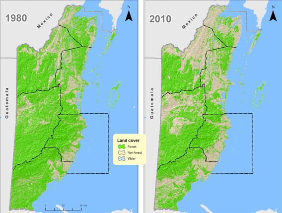 deforestation in belize