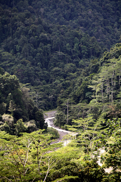 Rainforest in the Arfak Mountains of West Papua on the island of New Guinea