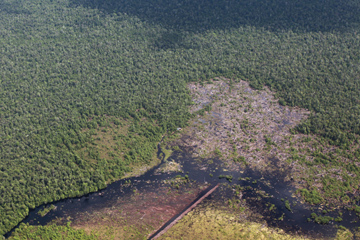 Clearing of peatland in Central Kalimantan