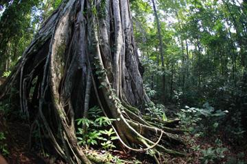 Rainforest in North Sulawesi