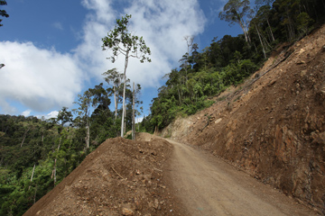 Road in West Papua