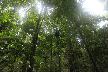 Lowland rainforest in West Papua