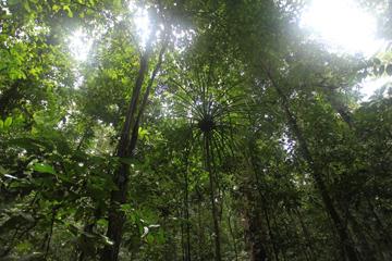 Lowland rainforest in West Papua