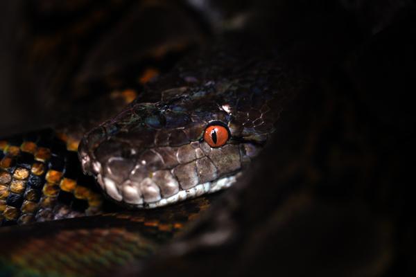 The World's longest snake