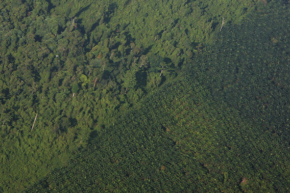 Oil palm and logged over rainforest in Sabah, Malaysia