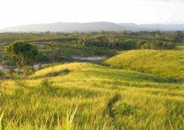 A tract of degraded land, with alang alang, in West Kalimantan, Indonesia.  Photo: Sekala/WRI