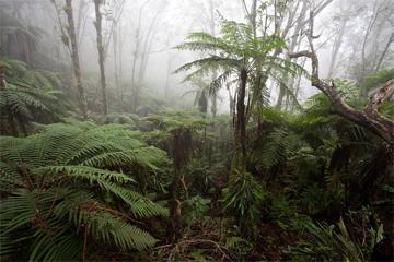 Cloud forest in Haiti