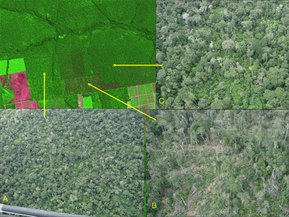DEGRAD, INPE's system for measuring forest degradation in the Amazon rainforest.