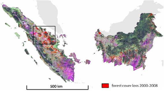 Forest cover loss for Sumatera and Kalimantan for 2000-2008