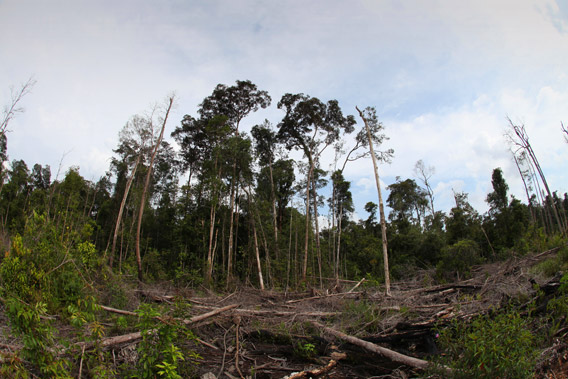Deforestation near Gunung Palung in Indonesian Borneo.  Photo by: Rhett A. Butler.