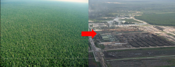 Forest to pulp mill in Riau Province, Sumatra, Indonesia