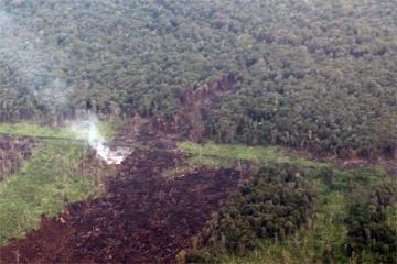 Deforestation in Indonesian Borneo