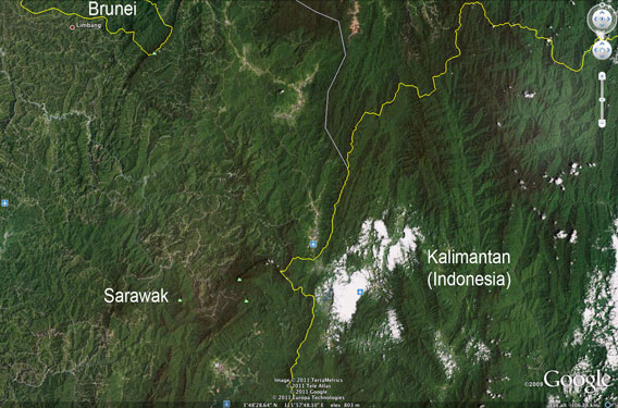 Logging roads and damaged forest in Sarawak compared with the healthy forest of Kalimantan (Indonesian Borneo)