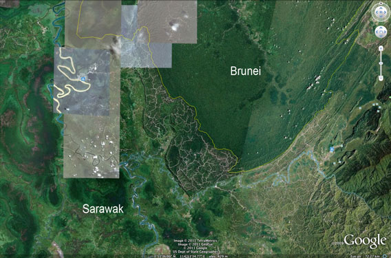 Logging roads and damaged forest in Sarawak compared with healthy forest in Brunei