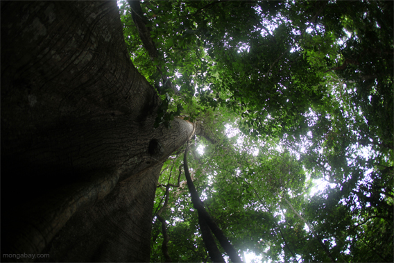 Panama rainforest.