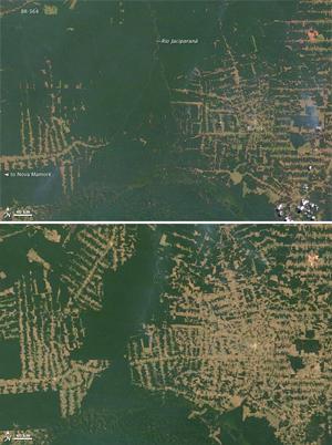 Deforestation In Brazil. deforestation in Brazil#39;s