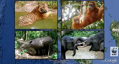 sumatra google earth image
