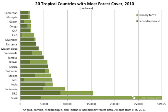 Tropical forest cover including old-growth forest area