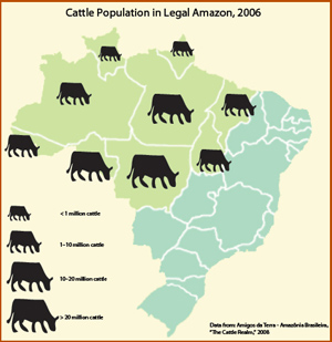 Cattle production in the Amazon