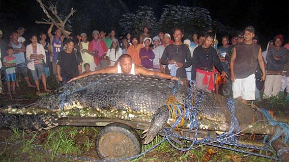Dorfbewohner mit dem größten Krokodil, das jemals lebend gefangen wurde. Foto mit freundlicher Genehmigung von AFP.