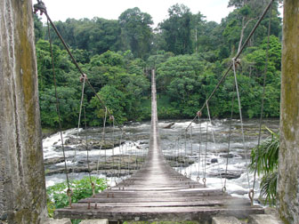 Bridge into Korup National Park.