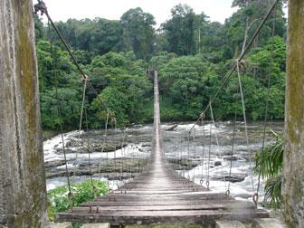 Pont traversant le parc national de Korup - Image fournie par un défenseur de l'environnement qui a tenu à rester anonyme