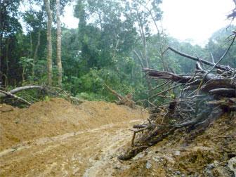 SAVE indique que cette photo illustre la déforestation nécessaire à la création des pépinières du groupe Herakles.