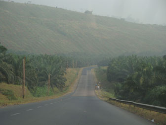 La plantation de palmiers à huile au Cameroun.  Image fournie par un  écologiste qui a demandé de ne pas être cité.