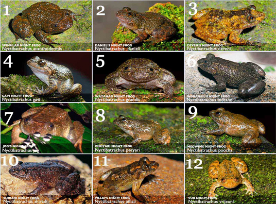 new frogs in india