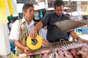 Luis Fernández (right) measures fish in the Puerto Maldonado market before buying them to test for mercury accumulation