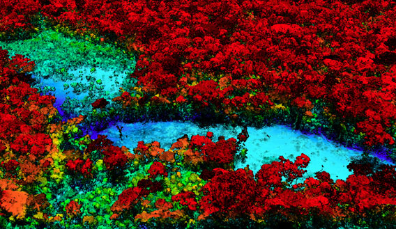 Breakthrough technology enables 3D mapping of rainforests, tree by tree