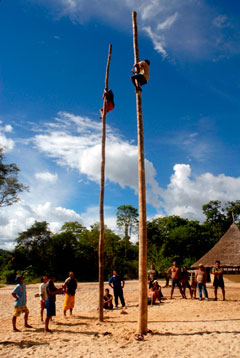 Participants scale the poles at the 2008 palm climbing workshop and competition.