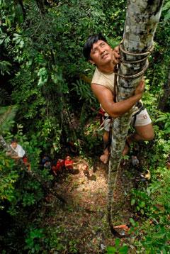 Practice on Oenocarpus palms with Caura Futures' custom gear