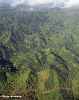 Oil palm and forest in Malaysia