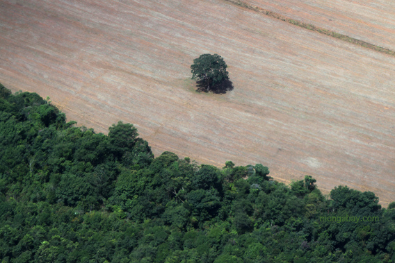 Deforestation in Brazil.