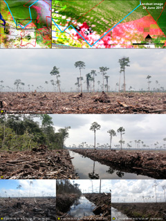 Peat draining and large-scale clearance of natural forest by APP wood supplier PT. Ruas Utama Jaya inside APP's Senepis Tiger Sanctuary in June and October 2011.